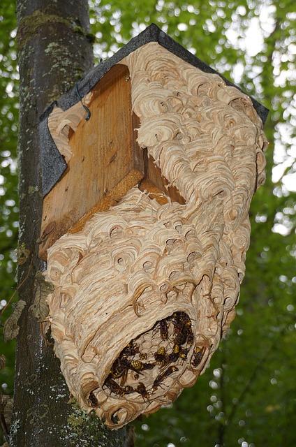 Hornissennest am Baum