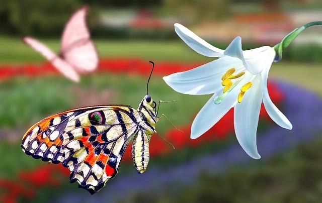 Schmetterling fliegt an Blume