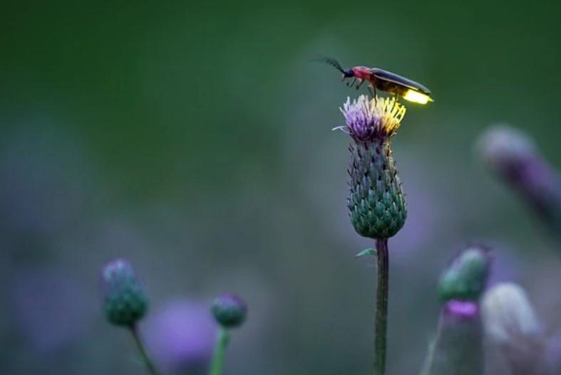 Glühwürmchen wartet (copyright Radim Schreiber)